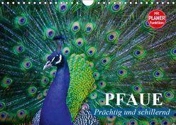 Pfaue. Prächtig und schillernd (Wandkalender 2019 DIN A4 quer) von Stanzer,  Elisabeth
