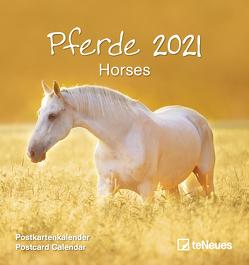 Pferde 2021 – Postkarten-Kalender – Kalender-mit-Postkarten – zum-raustrennen – 16×17