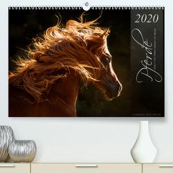 Pferde – Anmut und Stärke gepaart mit Magie (Premium, hochwertiger DIN A2 Wandkalender 2020, Kunstdruck in Hochglanz) von Mischnik,  Sabrina