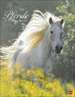 Pferde Classics Kalender 2022 von Heye, Stuewer,  Sabine
