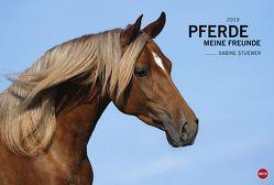 Pferde – Meine Freunde – Kalender 2019 von Heye, Stuewer,  Sabine