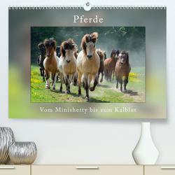 Pferde Vom Minishetty bis zum Kaltblut (Premium, hochwertiger DIN A2 Wandkalender 2020, Kunstdruck in Hochglanz) von Beuck,  Angelika