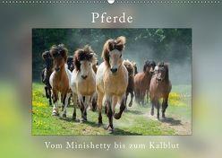 Pferde Vom Minishetty bis zum Kaltblut (Wandkalender 2018 DIN A2 quer) von Beuck,  Angelika