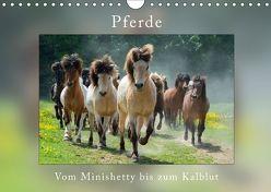 Pferde Vom Minishetty bis zum Kaltblut (Wandkalender 2018 DIN A4 quer) von Beuck,  Angelika