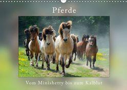 Pferde Vom Minishetty bis zum Kaltblut (Wandkalender 2019 DIN A3 quer) von Beuck,  Angelika