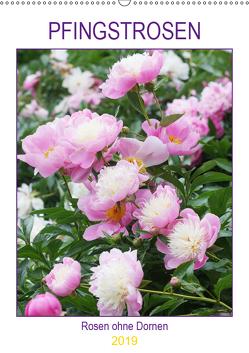 Pfingstrosen Rosen ohne Dornen (Wandkalender 2019 DIN A2 hoch) von Kruse,  Gisela