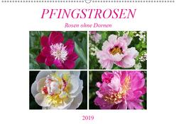 PFINGSTROSEN Rosen ohne Dornen (Wandkalender 2019 DIN A2 quer) von Kruse,  Gisela