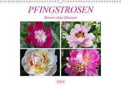 PFINGSTROSEN Rosen ohne Dornen (Wandkalender 2019 DIN A3 quer) von Kruse,  Gisela