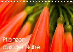 Pflanzen aus der Nähe (Tischkalender 2019 DIN A5 quer) von Großberger,  Gerhard