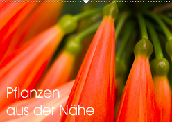 Pflanzen aus der Nähe (Wandkalender 2019 DIN A2 quer) von Großberger,  Gerhard