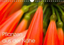 Pflanzen aus der Nähe (Wandkalender 2019 DIN A4 quer) von Großberger,  Gerhard