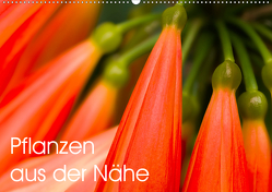 Pflanzen aus der Nähe (Wandkalender 2020 DIN A2 quer) von Großberger,  Gerhard