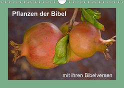 Pflanzen der Bibel (Wandkalender 2019 DIN A4 quer) von Vorndran,  Hans-Georg