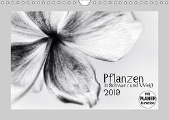 Pflanzen in Schwarz und Weiß (Wandkalender 2019 DIN A4 quer) von Karius,  Kirsten