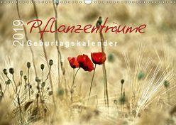 Pflanzenträume / Geburtstagskalender (Wandkalender 2019 DIN A3 quer) von Düll,  Sigrun