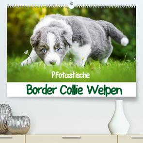 Pfotastische Border Collie Welpen (Premium, hochwertiger DIN A2 Wandkalender 2021, Kunstdruck in Hochglanz) von Mayer,  Andrea