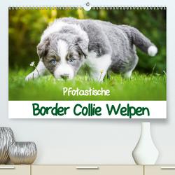 Pfotastische Border Collie Welpen (Premium, hochwertiger DIN A2 Wandkalender 2020, Kunstdruck in Hochglanz) von Mayer,  Andrea