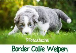 Pfotastische Border Collie Welpen (Wandkalender 2018 DIN A3 quer) von Mayer,  Andrea