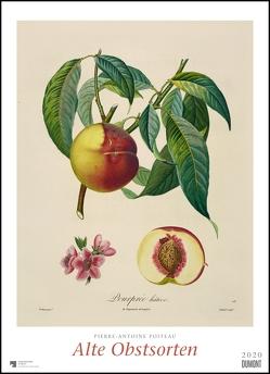Pierre Antoine Poiteau: Alte Obstsorten 2020 – DUMONT Kunst-Kalender – Poster-Format 49,5 x 68,5 cm von DUMONT Kalenderverlag, Poiteau,  Pierre Antoine