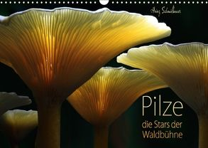 Pilze – die Stars der Waldbühne (Wandkalender 2018 DIN A3 quer) von Schmidbauer,  Heinz