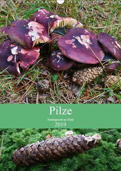 Pilze – Farbenpracht im Wald (Wandkalender 2019 DIN A3 hoch) von Barden,  Almut