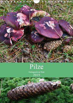 Pilze – Farbenpracht im Wald (Wandkalender 2019 DIN A4 hoch) von Barden,  Almut