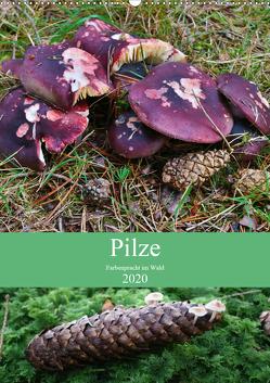 Pilze – Farbenpracht im Wald (Wandkalender 2020 DIN A2 hoch) von Barden,  Almut