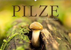 Pilze – fleißige Waldarbeiter (Wandkalender 2019 DIN A2 quer) von Wuchenauer pixelrohkost.de,  Markus