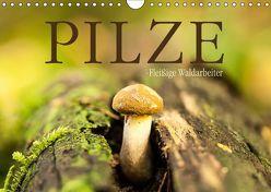 Pilze – fleißige Waldarbeiter (Wandkalender 2019 DIN A4 quer) von Wuchenauer pixelrohkost.de,  Markus