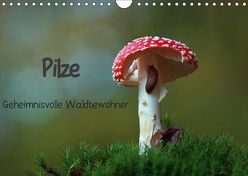 Pilze-Geheimnisvolle Waldbewohner (Wandkalender 2019 DIN A4 quer) von Klapp,  Lutz