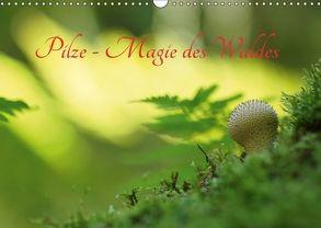 Pilze – Magie des Waldes (Wandkalender 2018 DIN A3 quer) von Klapp,  Lutz