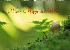 Pilze – Magie des Waldes (Wandkalender 2019 DIN A2 quer) von Klapp,  Lutz