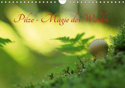 Pilze – Magie des Waldes (Wandkalender 2019 DIN A4 quer) von Klapp,  Lutz