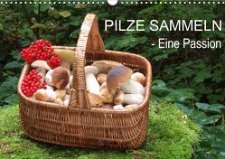 Pilze sammeln – eine Passion (Wandkalender 2021 DIN A3 quer) von Bindig,  Rudolf