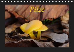 Pilze (Tischkalender 2019 DIN A5 quer) von Everaars,  Jeroen