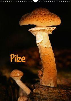 Pilze (Wandkalender 2019 DIN A3 hoch) von Berg,  Martina