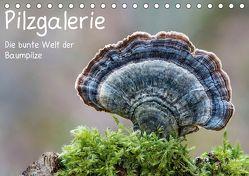 Pilzgalerie – Die bunte Welt der Baumpilze (Tischkalender 2019 DIN A5 quer) von Wurster,  Beate