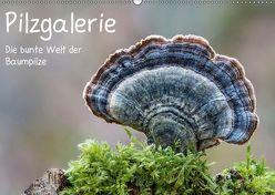 Pilzgalerie – Die bunte Welt der Baumpilze (Wandkalender 2019 DIN A2 quer) von Wurster,  Beate