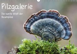 Pilzgalerie – Die bunte Welt der Baumpilze (Wandkalender 2019 DIN A3 quer) von Wurster,  Beate