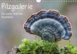 Pilzgalerie – Die bunte Welt der Baumpilze (Wandkalender 2019 DIN A4 quer) von Wurster,  Beate