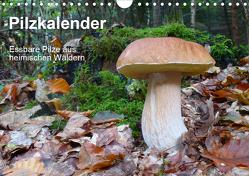 Pilzkalender (Wandkalender 2020 DIN A4 quer) von Bindig,  Rudolf