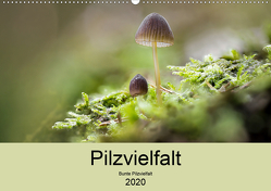 Pilzvielfalt (Wandkalender 2020 DIN A2 quer) von Reim,  Katharina