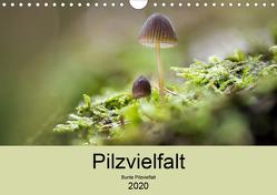 Pilzvielfalt (Wandkalender 2020 DIN A4 quer) von Reim,  Katharina