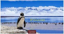 Pinguine 2022 L 35x50cm