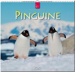 Pinguine von Chichester,  Page, Leue,  Holger