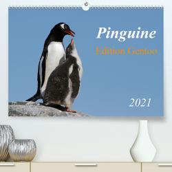 Pinguine – Edition Gentoo (Premium, hochwertiger DIN A2 Wandkalender 2021, Kunstdruck in Hochglanz) von Schlögl,  Brigitte