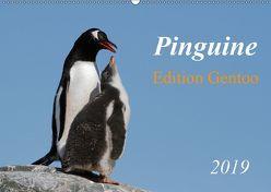 Pinguine – Edition Gentoo (Wandkalender 2019 DIN A2 quer) von Schlögl,  Brigitte