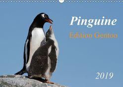Pinguine – Edition Gentoo (Wandkalender 2019 DIN A3 quer) von Schlögl,  Brigitte