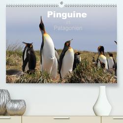 Pinguine in Patagonien (Premium, hochwertiger DIN A2 Wandkalender 2020, Kunstdruck in Hochglanz) von Göb,  Clemens, Köhler,  Ute