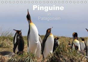 Pinguine in Patagonien (Tischkalender 2018 DIN A5 quer) von Göb,  Clemens, Köhler,  Ute